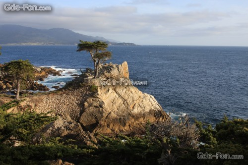 lone cypress wallpaper