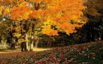 fall landscapes wallpaper