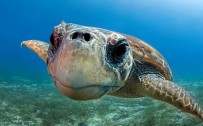 free sea turtle wallpaper